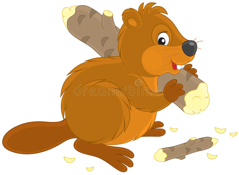 Beaver vector illustration