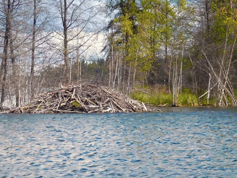 Beaver la casa de campo en un lago en un día ventoso imagenes de archivo