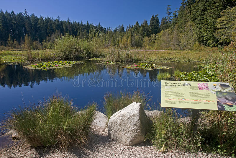 Beaver Lake in Stanley Park, Vancouver royalty free stock photo