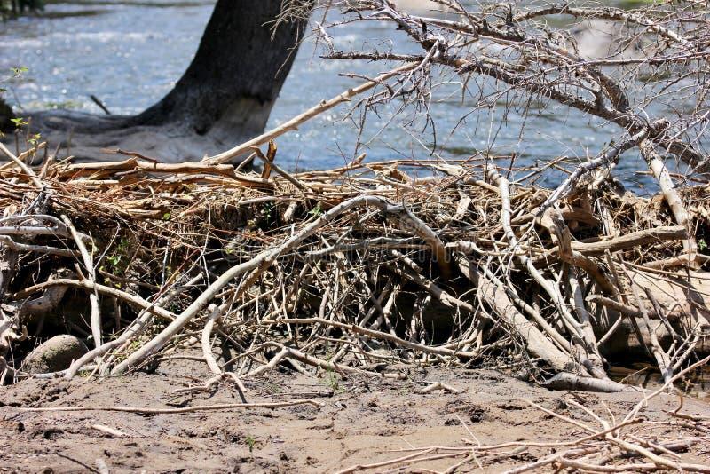 Beaver le barrage et les arbres près d'un courant de montagne photographie stock