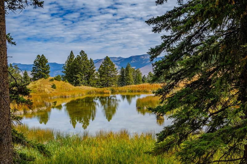 Beaver Pond TrailA dramatic fall view of Beaver Ponds, Yellowstone National Park royalty free stock photos