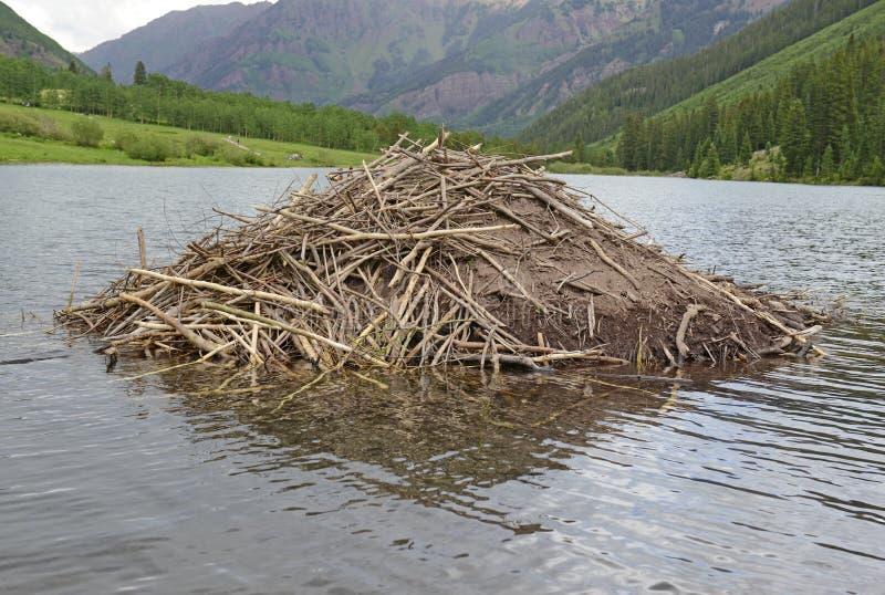Beaver Verdammung in einem See in den Bergen lizenzfreie stockfotografie