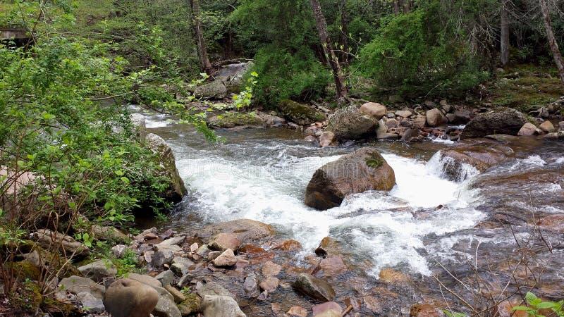 Beaverdamkreek royalty-vrije stock fotografie