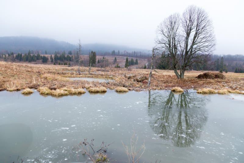 Beavers le lac photos stock