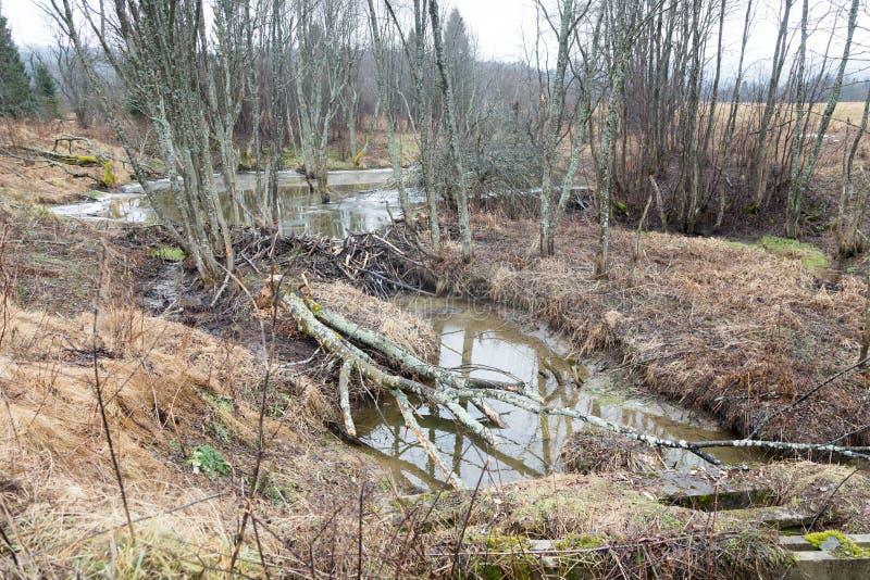 Beavers le lac photo libre de droits