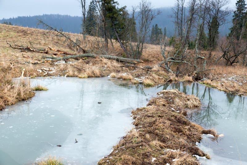 Beavers le lac images libres de droits