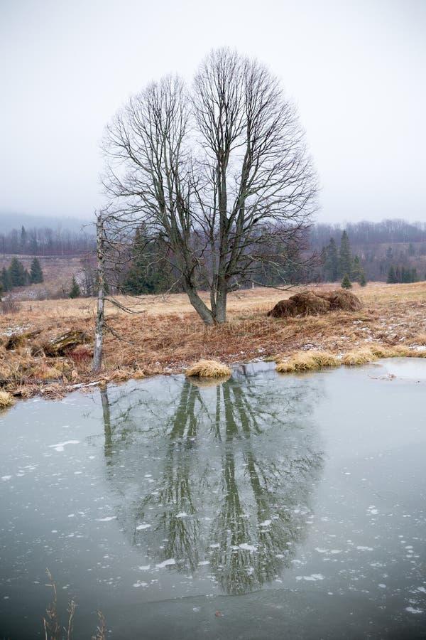 Beavers le lac photo stock