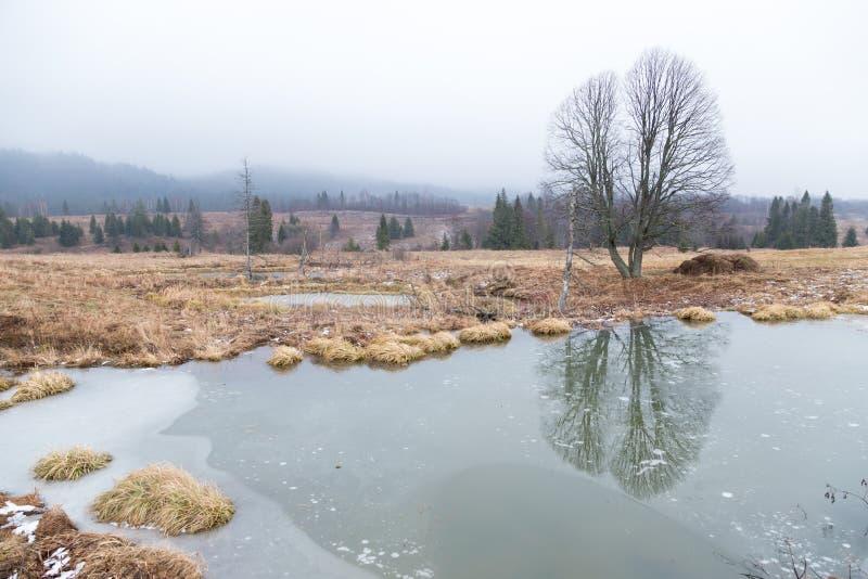 Beavers le lac photos libres de droits