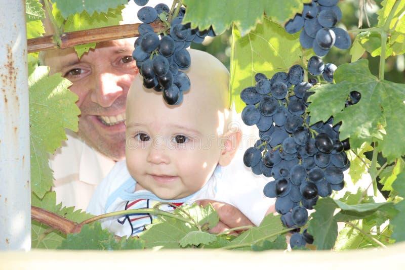 Bebé, abuelo y uvas fotos de archivo libres de regalías
