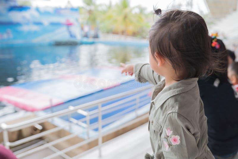 Bebé asiático que goza para ver el delfín mostrar fotografía de archivo libre de regalías