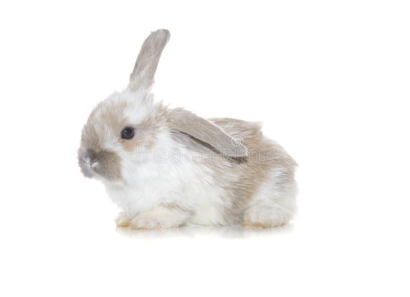 Bebé Bunny Cuteness imagen de archivo