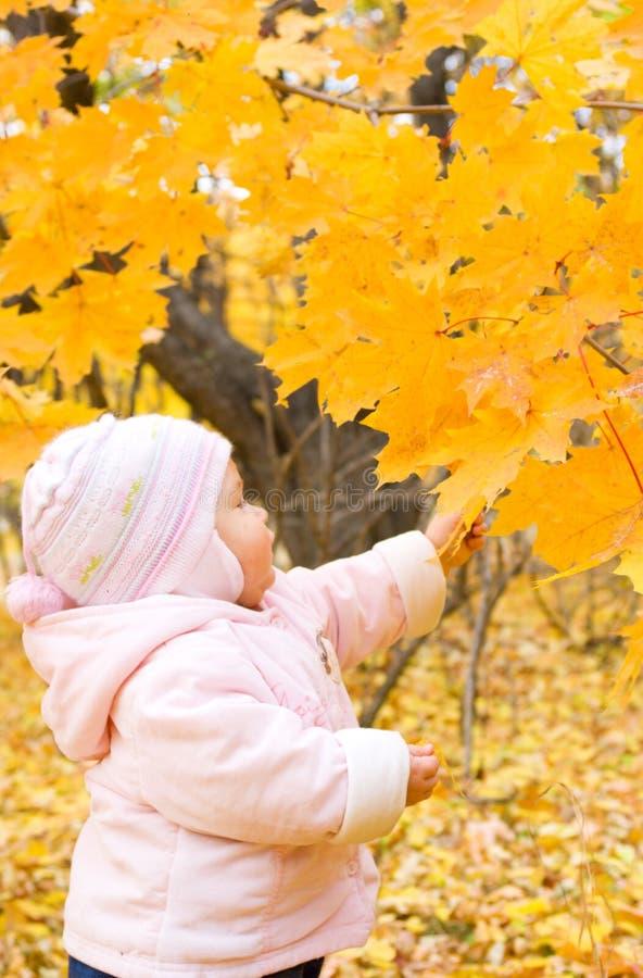 Download Bebé Con La Ramificación Del Otoño Del árbol Imagen de archivo - Imagen de árbol, bebé: 7284691
