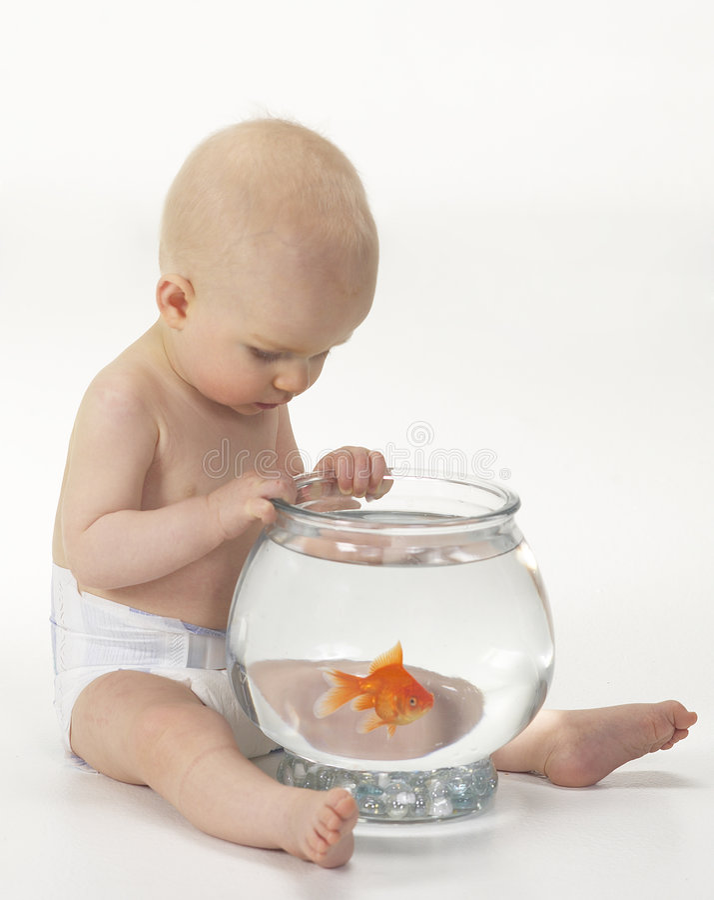Bebé con los pescados del animal doméstico imagenes de archivo