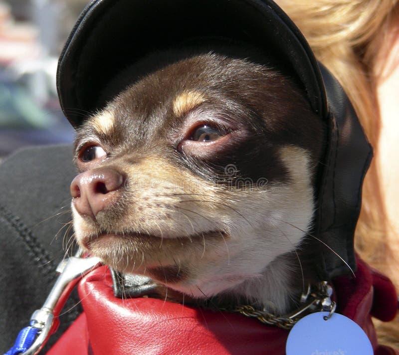 Bebé de Harley imagen de archivo libre de regalías