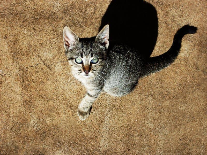 Bebé de Kitty imagenes de archivo