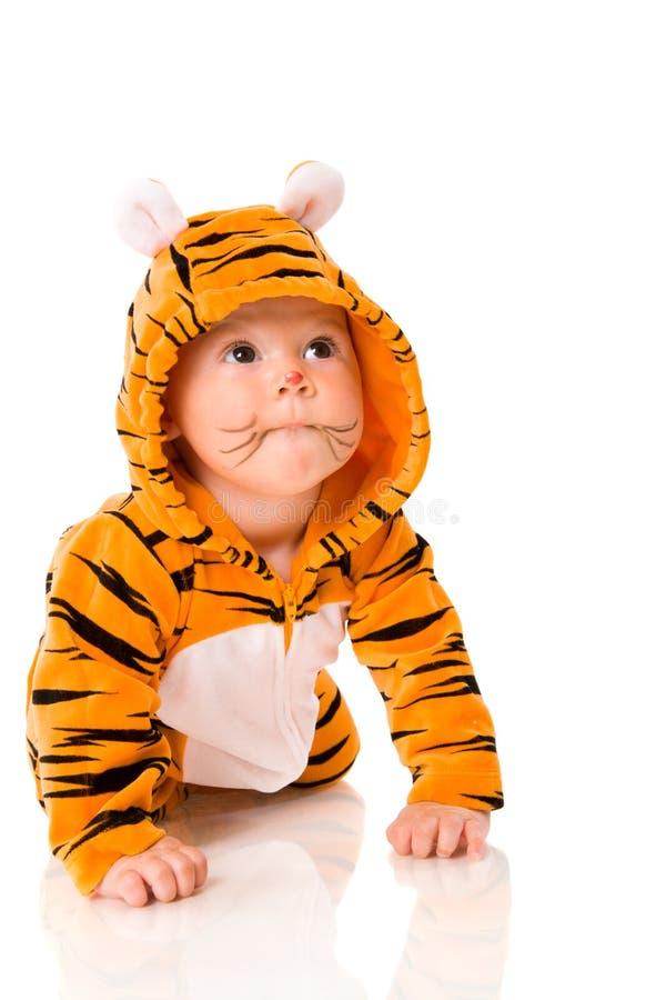 Bebé del tigre fotografía de archivo