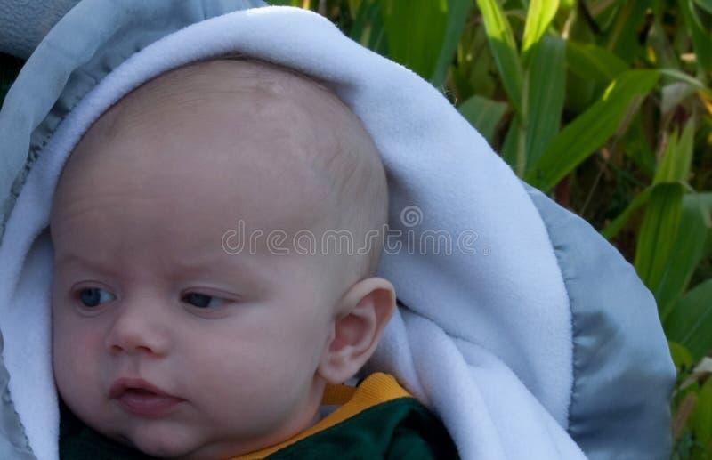Bebé en un campo de maíz foto de archivo
