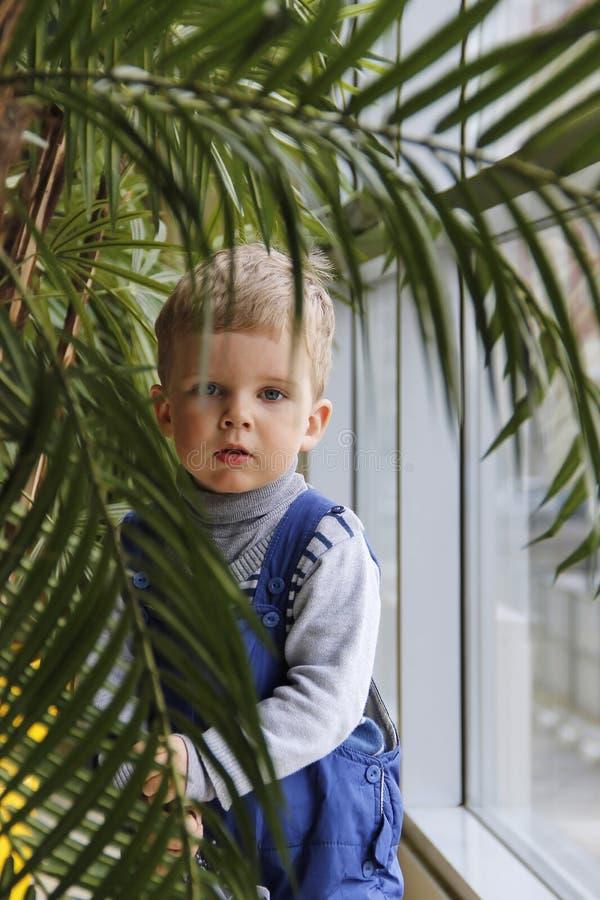 Bebé en un mono azul detrás de una palmera cerca de la ventana imagen de archivo libre de regalías