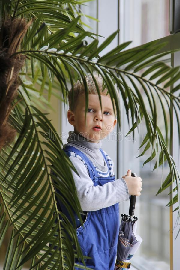 Bebé en un mono azul detrás de una palmera cerca de la ventana fotos de archivo