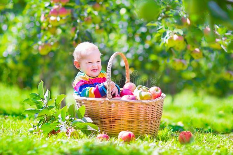 Bebé en una cesta de la manzana imagen de archivo libre de regalías