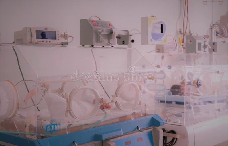 Bebé inocente recién nacido que duerme en una incubadora fotos de archivo libres de regalías