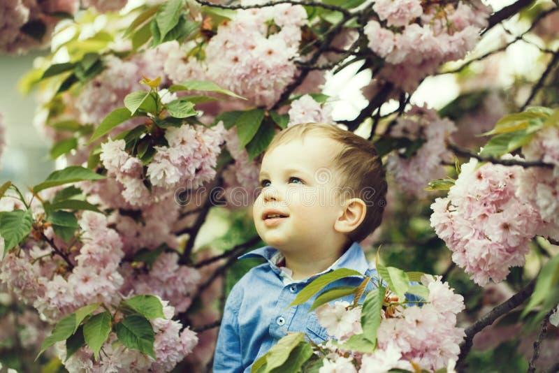 Bebé lindo entre las flores florecientes del rosa fotos de archivo