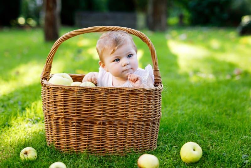Bebé lindo que se sienta en cesta por completo con las manzanas maduras en una granja en otoño temprano imagen de archivo