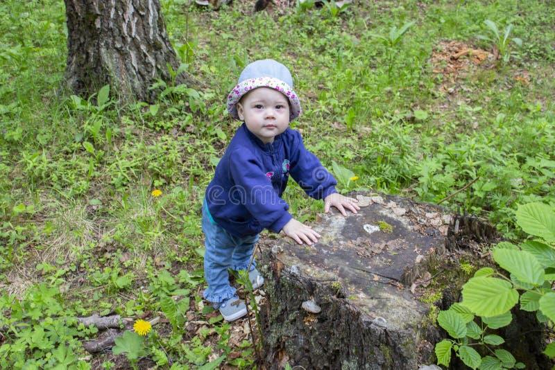 Bebé 8-9 meses que caminan a través del bosque, aprendiendo caminar, aferrándose al tocón Niña en vaqueros y un sombrero en foto de archivo libre de regalías
