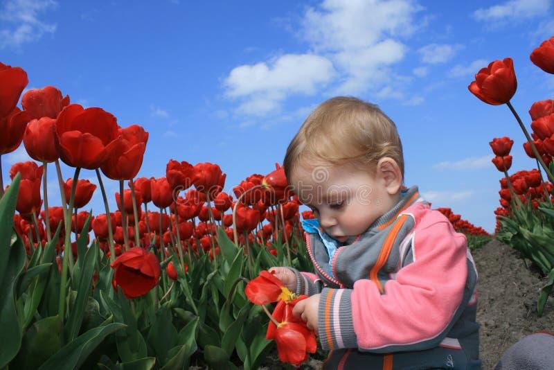 Bebé-muchacha con los tulipanes fotos de archivo