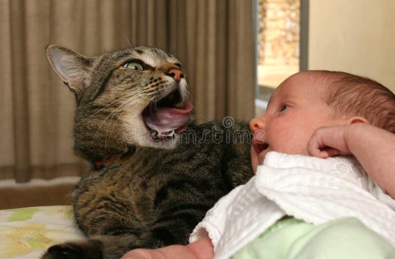 Bebé que es mirado por el gato fotos de archivo libres de regalías