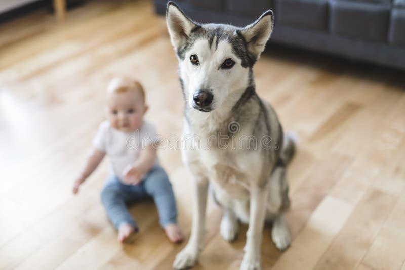 Bebé que se sienta con el perro esquimal en el piso foto de archivo libre de regalías