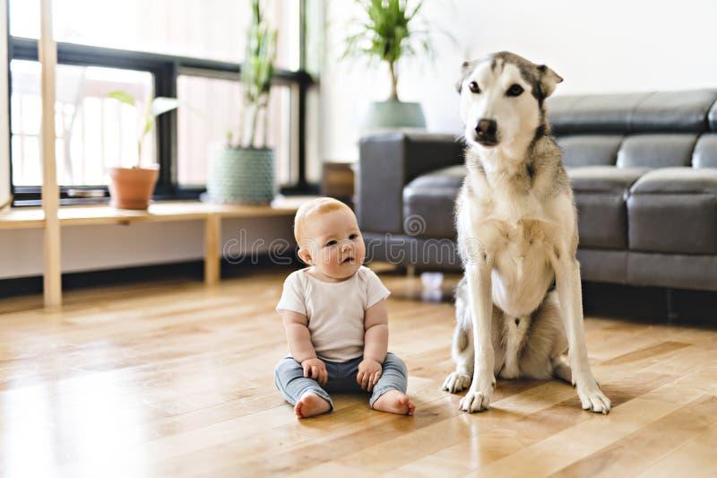 Bebé que se sienta con el perro esquimal en el piso fotografía de archivo libre de regalías