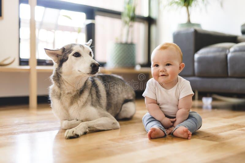 Bebé que se sienta con el perro esquimal en el piso foto de archivo