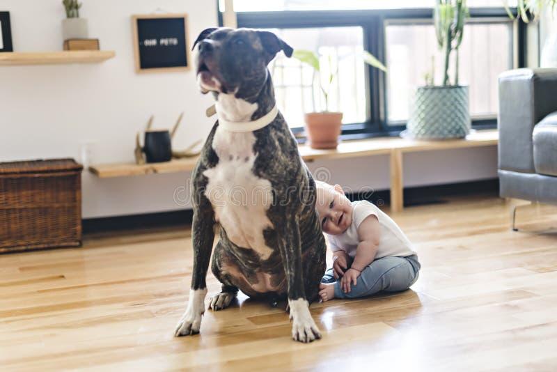 Bebé que se sienta con el pitbull en el piso imágenes de archivo libres de regalías