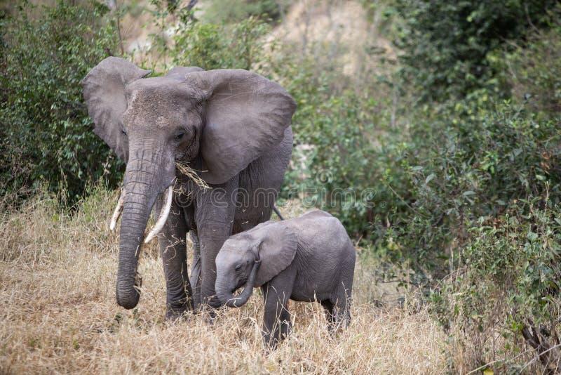 Bebé y madre elefante fotografía de archivo