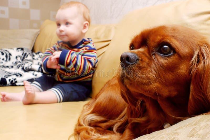 Bebé y perro fotos de archivo
