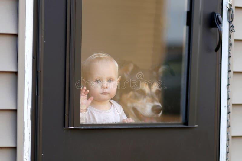 Bebé y perro casero que esperan en la puerta que mira hacia fuera la ventana imagen de archivo