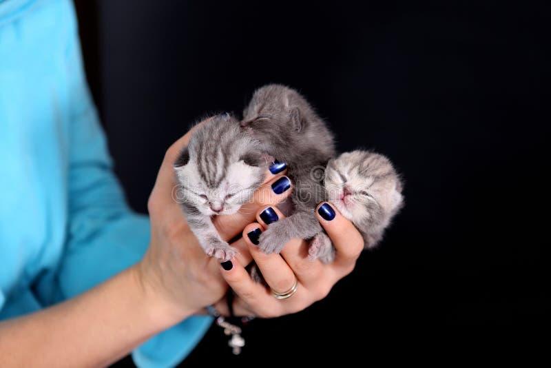 Bebés del gatito fotos de archivo libres de regalías
