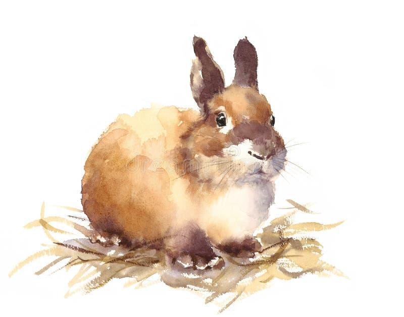 Bebê bonito Bunny Watercolor Animals Illustration Hand tirado ilustração royalty free