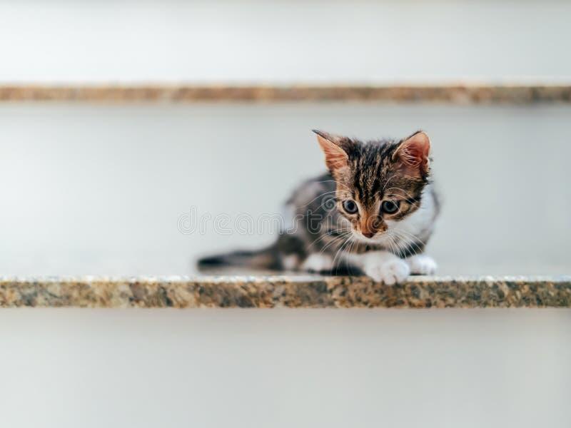 Bebê bonito Cat Portrait On Stairs imagens de stock royalty free