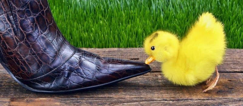Bebê bonito ducky fotografia de stock