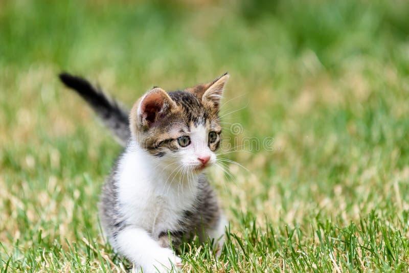 Bebê Cat Playing In Grass fotos de stock