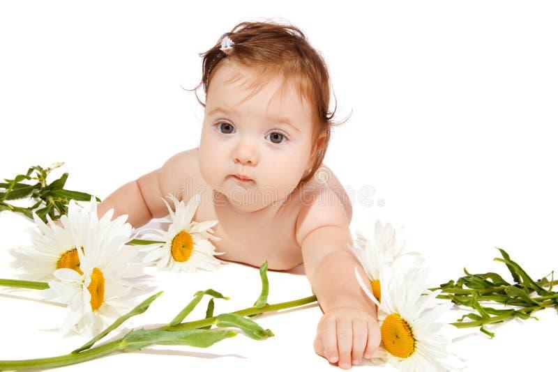 Bebê da camomila imagem de stock