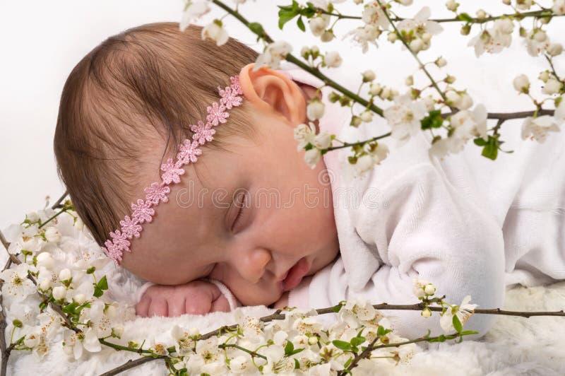 Bebê de sono em flores da ameixa da flor da mola imagens de stock royalty free