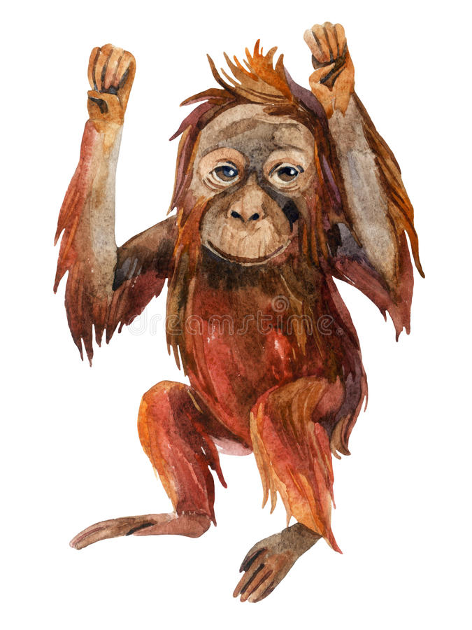 Bebê do orangotango no branco ilustração do vetor