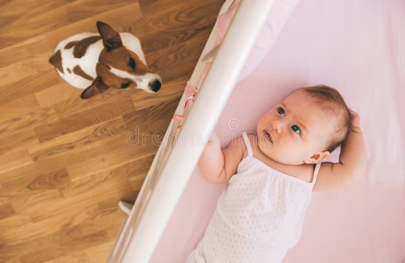Bebê e cão fotografia de stock royalty free