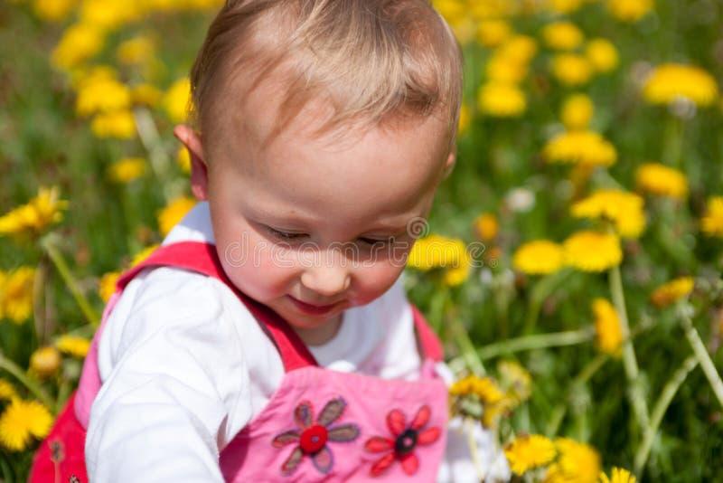 Bebê em cravos-de-defunto do amoungst fotos de stock royalty free