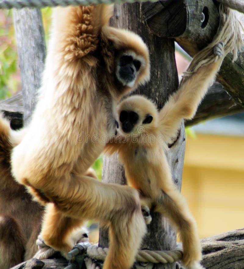 Bebê entregue do gibão fotos de stock royalty free