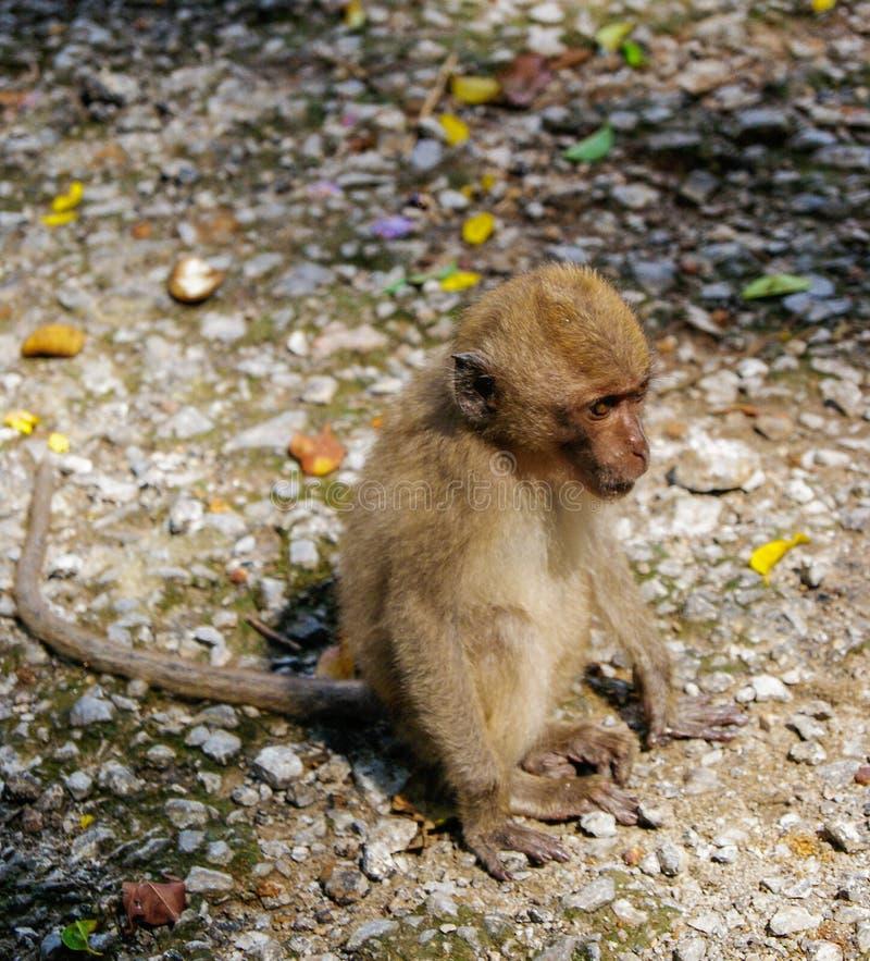 Bebê-macaco pequeno na floresta do macaco de Ubud, Bali, Indonésia fotografia de stock royalty free