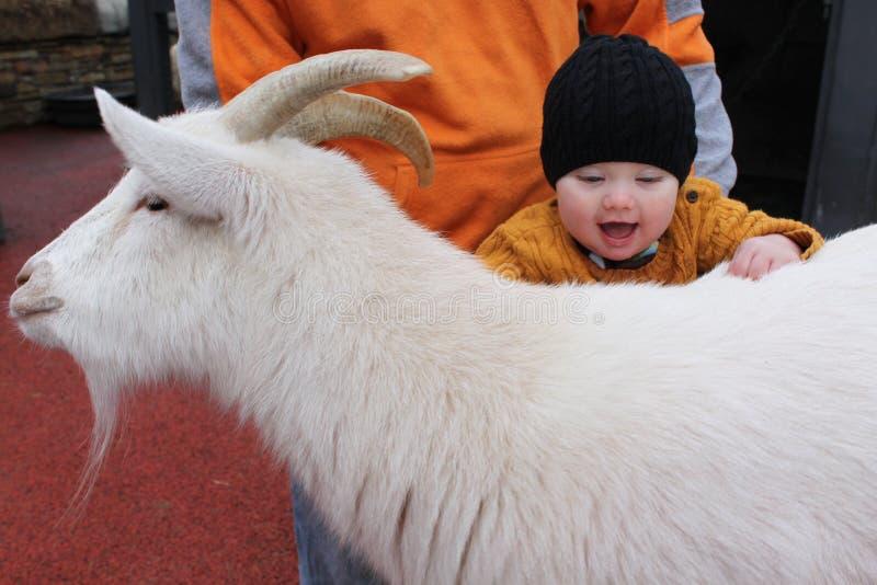 Bebê no jardim zoológico Petting imagens de stock royalty free